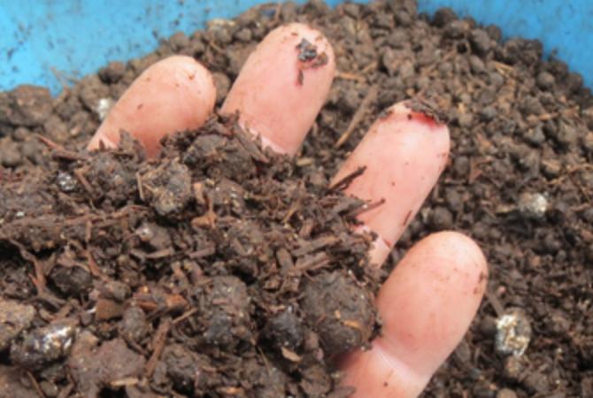 Aged Mushroom Compost